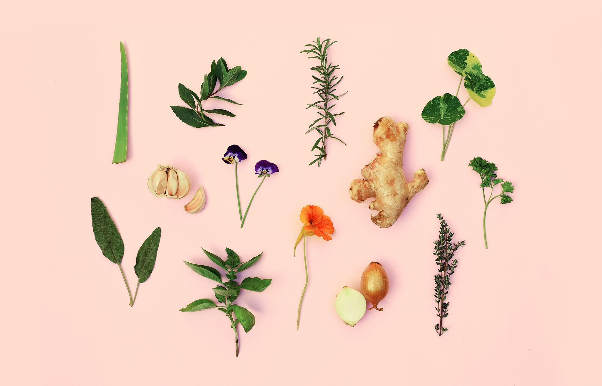 Heilpflanzen Sammlung