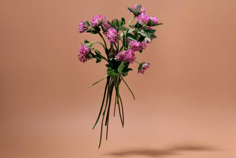 Heilpflanzen Blog